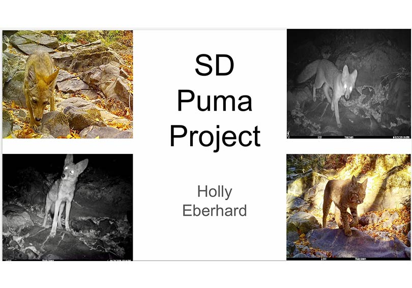 SD's Holly Eberhard Shares Her Research on Wild Cats of Marin for ROSE Project